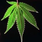 medical-marijuana-history-749681