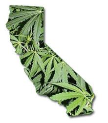 marijuana-california