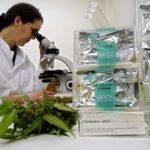 Medical Marijuana Clinics