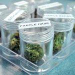 Medical Marijuana Hits Mainstream Media