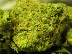 marijuana-ingrid