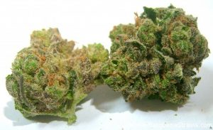 NYC-Diesel good for chronic pain