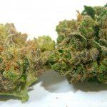 New York City Diesel Marijuana Seeds