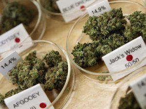 marijuana strains in a dispensary