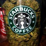 Medical Marijuana Dispensaries in California