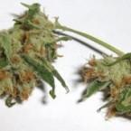 lsd-cannabis-300x177