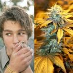Adolescent cannabis users could end up with a lower IQ