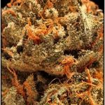 How to Spot the Differences Between Indica & Sativa