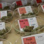 Medical Marijuana Legalization on a National Level