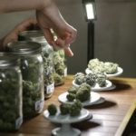 John Morgan – Advocate of Medical Marijuana in Florida