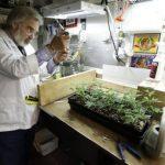 Massachusetts Medical Marijuana Regulations Update