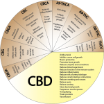 CBD – A Miracle Compound?