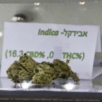 An Avidekel marijuana bud is displayed at the Tikun Olam company centre in Tel Aviv