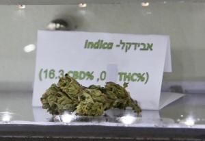 An Avidekel marijuana bud is displayed at the Tikun Olam company centre in Tel Aviv