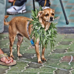 Could Medical Marijuana Work For Animals?
