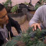 Why Sanjay Gupta Changed His Opinion on Medical Marijuana