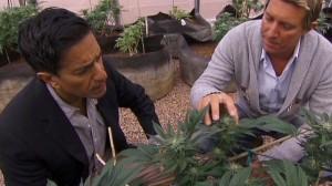 sanjay gupta marijuana