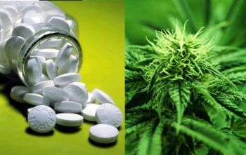 medical-marijuana-an-alternative