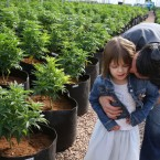 In this Feb. 7, 2014 photo, Matt Figi hugs and tickles his once severely-ill 7-year-old daughter Charlotte, as they wander around inside a greenhouse for a special strain of medical marijuana known as Charlotte's Web, which was named after the girl early in her treatment, in a remote spot in the mountains west of Colorado Springs, Colo. A few years ago, Charlotte's doctors were out of ideas to help her. Suffering from a rare disorder known as Dravet's syndrome, Charlotte had as many as 300 grand mal seizures a week, was confined to a wheelchair, went into repeated cardiac arrest and could barely speak. Now Charlotte is largely seizure-free, able to walk, talk and feed herself, with her parents attributing her dramatic improvement to this strain of medical cannabis. (AP Photo/Brennan Linsley)