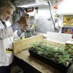 More Medical Marijuana Research