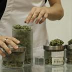 Michigan_s Medical Marijuana Dispensaries Could Save More Lives