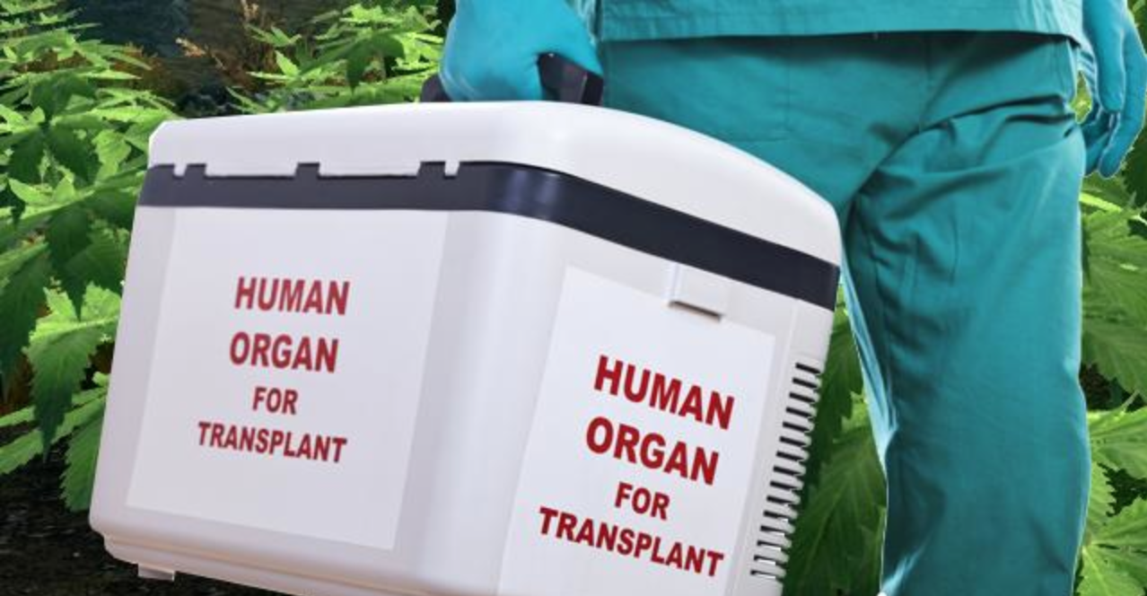 New-Study-Shows-THC-Could-Delay-Organ-Rejection-In-Transplant-Patients