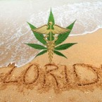 The Consequences of Growing Weed in Florida