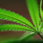 Startup Targeting Medical Marijuana Market
