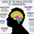 Why Do We Have Cannabinoid Receptors