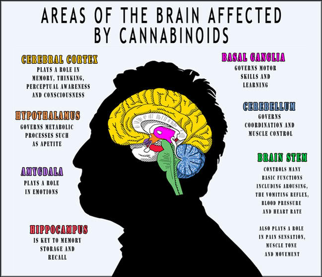 Why-Do-We-Have-Cannabinoid-Receptors