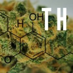 Marijuana Strains That Contain THCV
