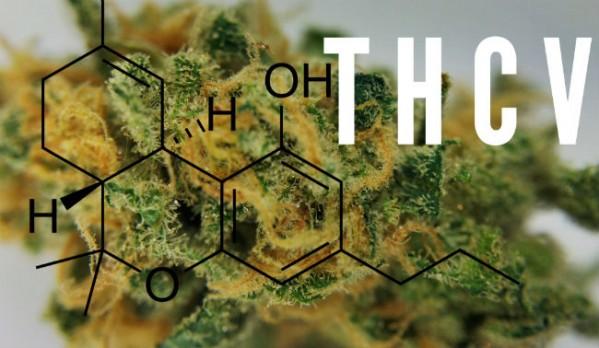 Marijuana-Strains-That-Contain-THCV
