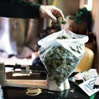 Are Marijuana Dealers Still In Business