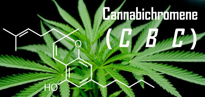 Health-Benefits-Of-CBC-Cannabichromene