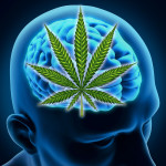 Study Shows That Marijuana Has No Long Term Effects on the Brain