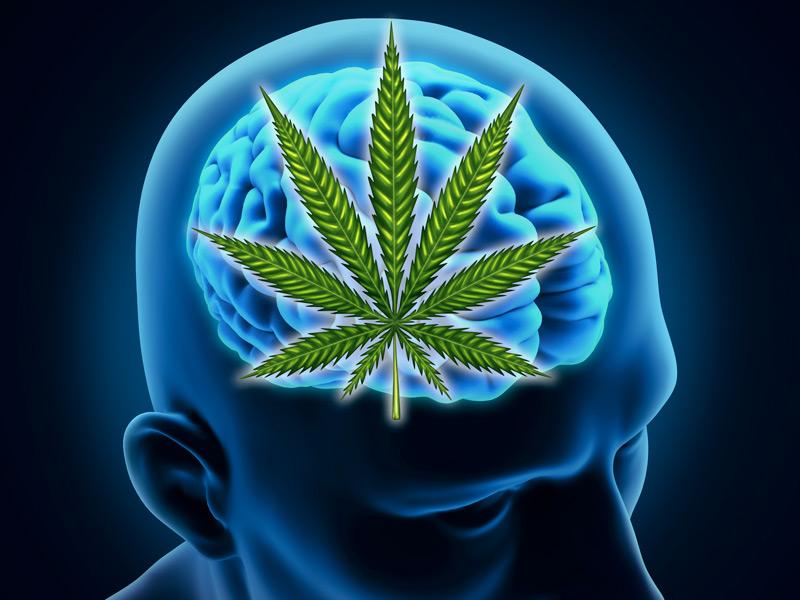 Study-Shows-That-Marijuana-Has-No-Long-Term-Effects-on-the-Brain