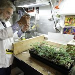 The Future Of Medical Marijuana Research