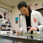 United States Says Yes To Medical Marijuana