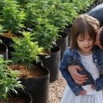 Medical cannabis, a fighting chance against autism