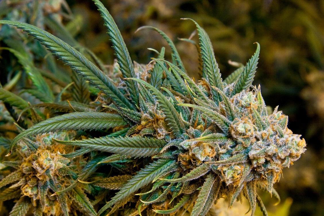 Marijuana to get your mind off Bulimia