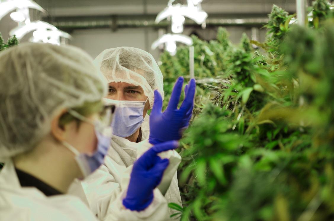 Medical marijuana and Mania
