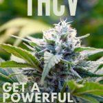 THCV as Medicine