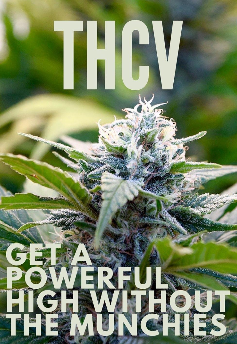 THCV-BLOG-978x1467