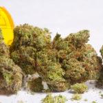 Quadriplegia and Medical Marijuana