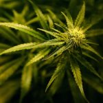 Emphysema and Medical Marijuana