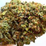 Raphael Marijuana Strain