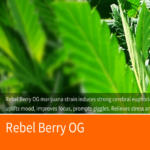 Rebel Berry OG Medical Cannabis Strain