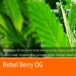 Rebel Berry OG Medical Cannabis Strain