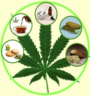 Different Types of Marijuana and Effects on Body