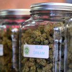 CBD (Cannabidiol) In Medical Marijuana